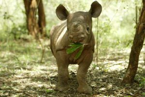 Rhino_20Sept